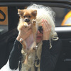 Amanda Bynes' Parents Officially File for Conservatorship [Splash]