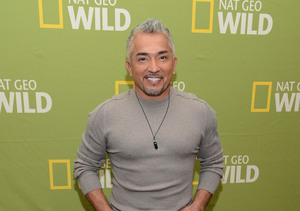 Cesar Millan Incident Under Investigation for Possible Animal Cruelty