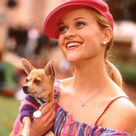 Reese Witherspoon's 'Legally Blonde' Chihuahua Co-Star Dies