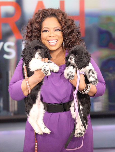 Oprah Winfrey's puppy surprise