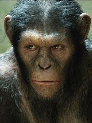 rise-apes.jpg