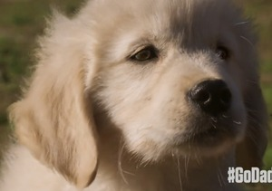 GoDaddy Pulls 'Puppy' Ad from Super Bowl