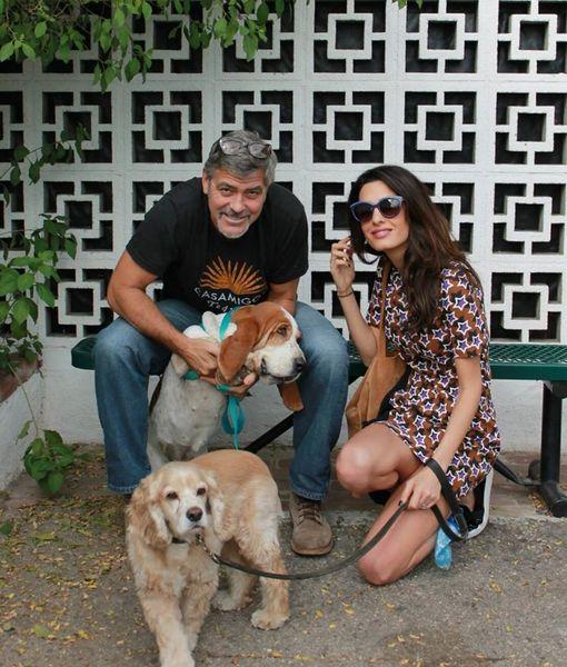 George Clooney & Amal Adopt a Dog!