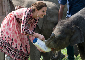 Royally Cute! Kate Middleton Looks Beyond Thrilled to Feed a Baby Elephant
