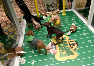 How Cute Puppies Made Their Way from Being Abandoned to the Puppy Bowl