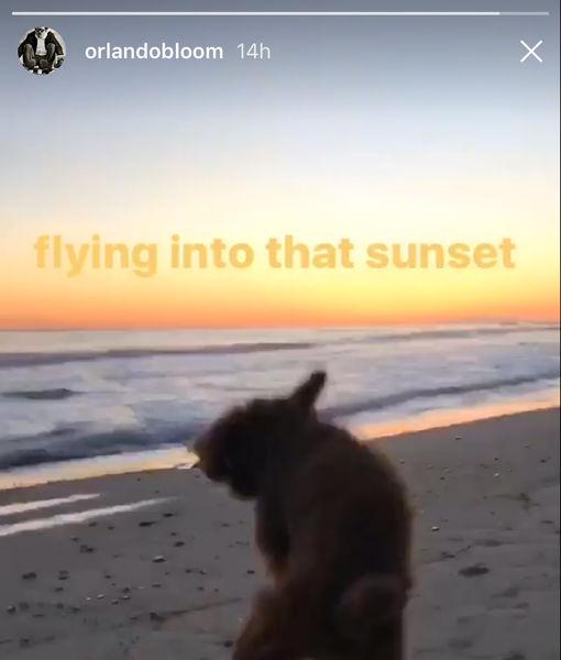 orlando-dog