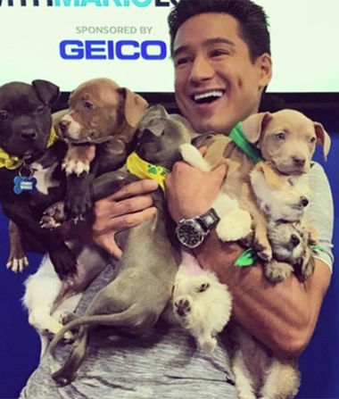 Stars with Adorable Puppies