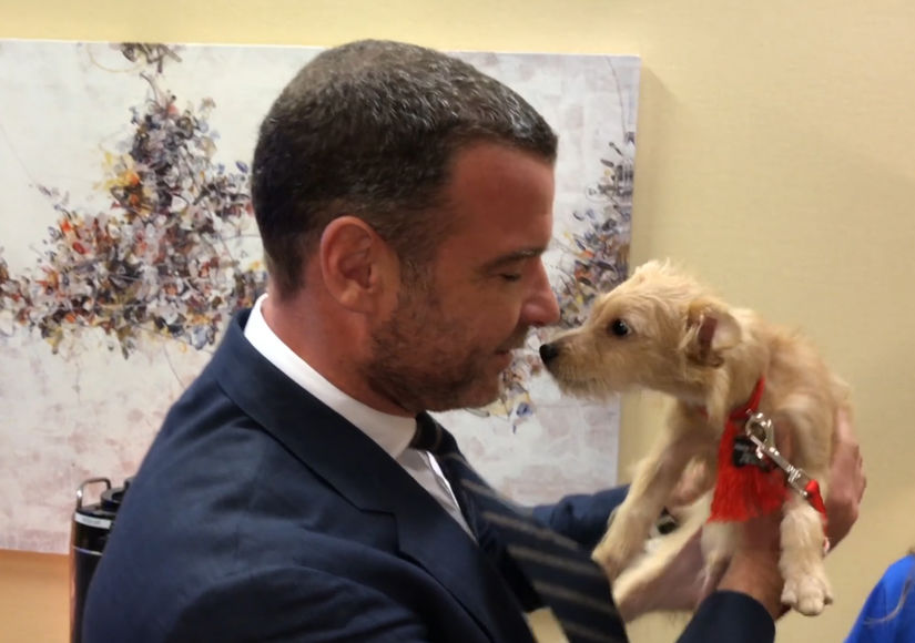 Liev Schreiber Adopts Two Displaced Puppies from Houston