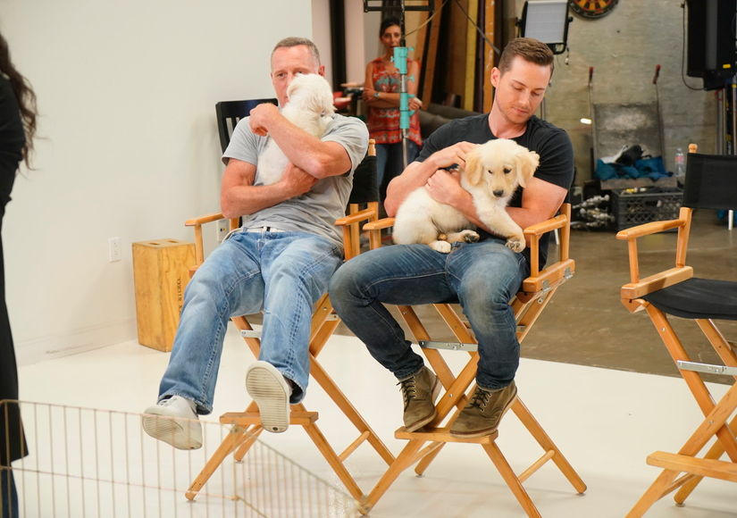 Cute Overload! NBC's 3 'Chicago' Shows Hold Puppy Casting Call