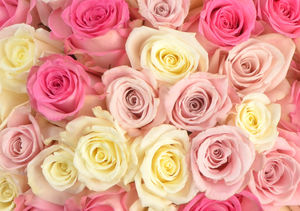 Win It! A Dozen PassionRoses