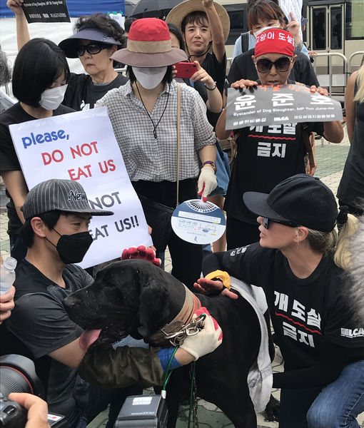 Kim Basinger Protests Dog Meat Trade in South Korea