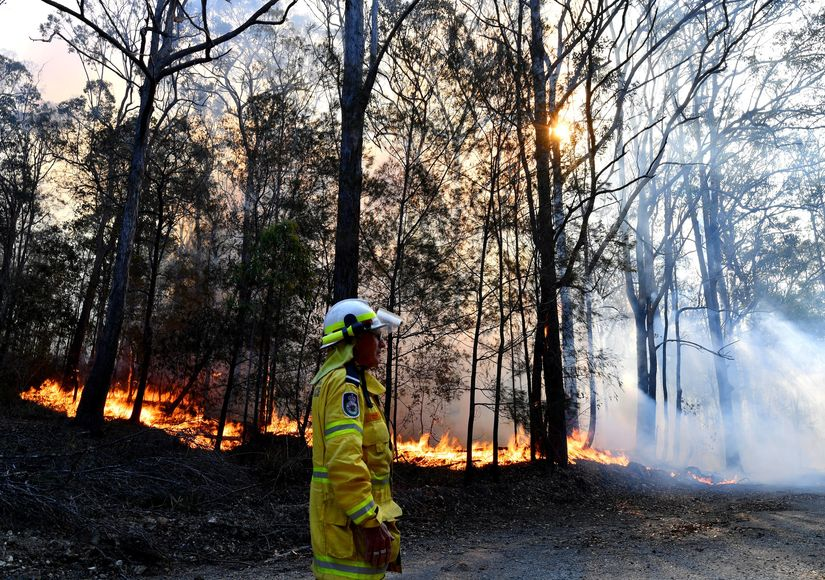 Australia's Bushfire Crisis: How You Can Donate
