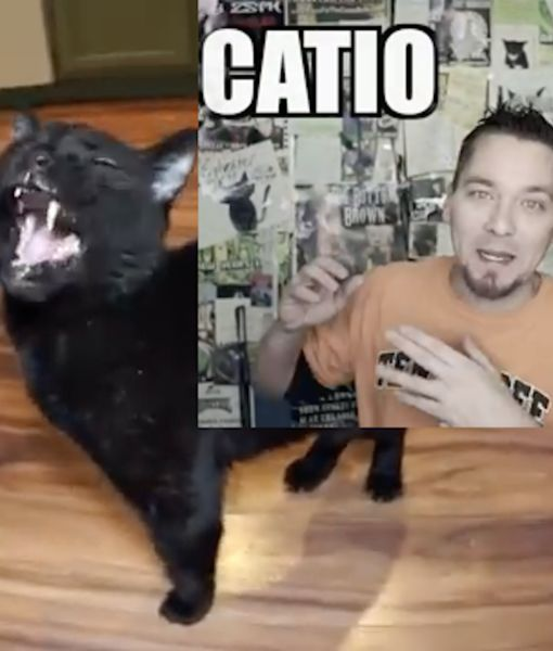 'Talking Kitty Cat' YouTuber Steve Cash Dead at 40