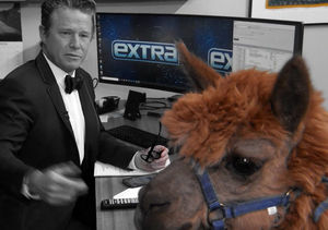 The Emmys Guest Everyone Wanted, but Only 'Extra' Got… the Alpaca!