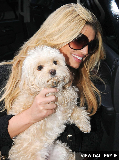 Jessica Simpson adopted her Maltipoo Daisy in 2005 and played the role of Daisy Duke in 'The Dukes of Hazzard the same year.
