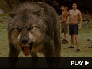 New Moon werewolves
