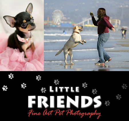 Little Friends Fine Art Pet Photography