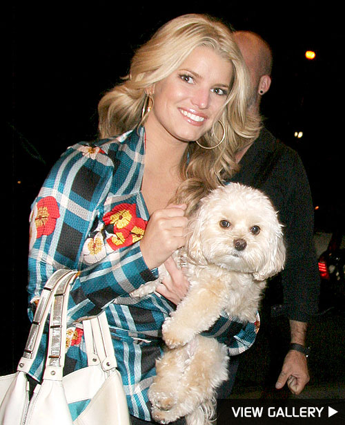 jessica simpson dog missing
